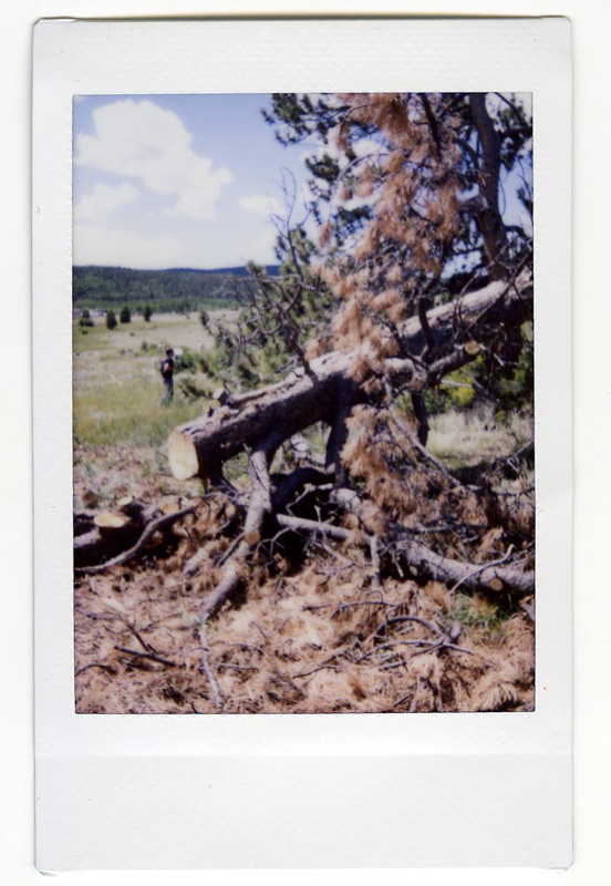 camping polaroid 09